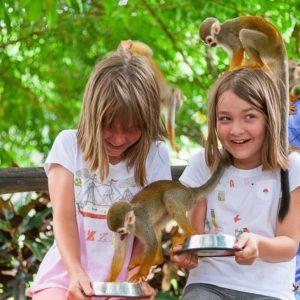 Monkey land (остров обезьян)